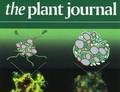 Krisprováním proti kontaminaci rostlin