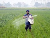 GM půdní bakterie šetří peníze i životní prostředí