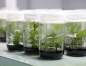 Nutriční odpověď rostlin na změnu klimatu byla odhalena