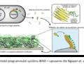 Bakteriální biofilmy jako platformy pro sestavení funkčních materiálů a senzorů