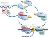 Cas-CLOVER - alternativa ke CRISPR/Cas9