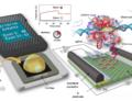 Detekce změn DNA pomocí CRISPR čipů