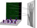 Světlo, kamera, CRISPR: Editace genomu pro uložení krátkého filmu do DNA živých bakterií