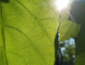 Zkoumání fotosyntézy – cesta k výkonnějším energetickým zařízením