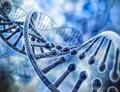 Potraviny, které neobsahují geny