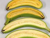 S GM banány proti očním vadám