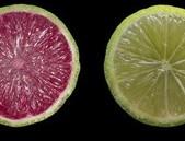 Červené citrony