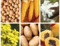 Rostoucí plochy GM plodin ve světě