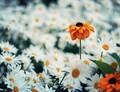 Mechanismus chránící plodnost rostlin během stresu byl identifikován