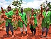 Keňský národní úřad pro biologickou bezpečnost schválil GM maniok