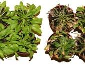 Nová ochrana rostlin před patogeny