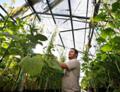 Kanada změnila regulace GM rostlin
