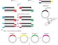 Vědci vyvinuli jednoduchou a efektivní metodu přípravy TALE konstruktů